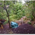 in Komposthaufen im Garten
